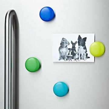 fridge-clips