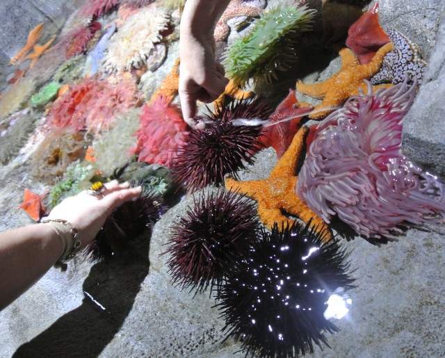 The Aquarium of the Pacific