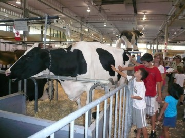 The Farm at the CNE Photo Credit: Sonya D.