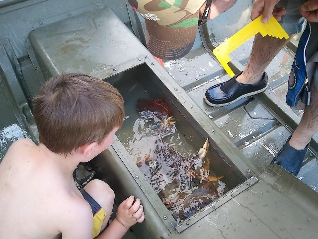 Catching Crabs.