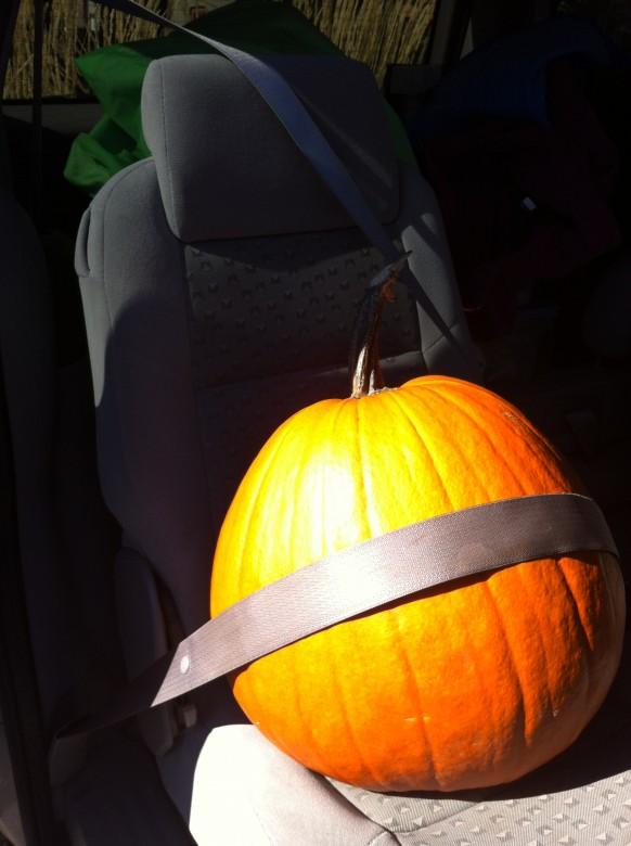 our new pumpkin