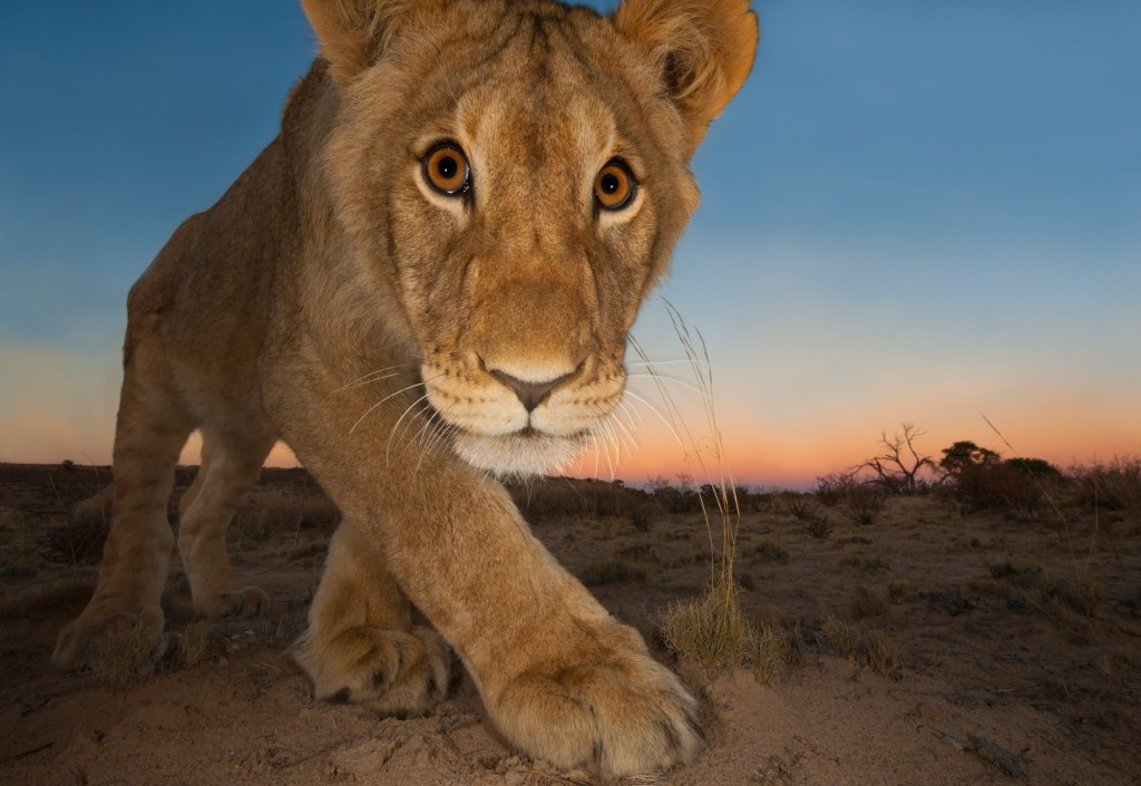 World's Best Wildlife Photography Of The Year