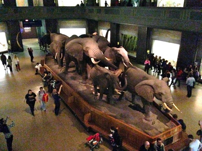 American Museum of Natural History NYC - Photo Credit: Sonya D.