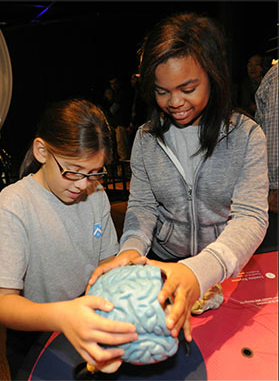 Photo courtesy of the Ontario Science Centre Brain Exhibit