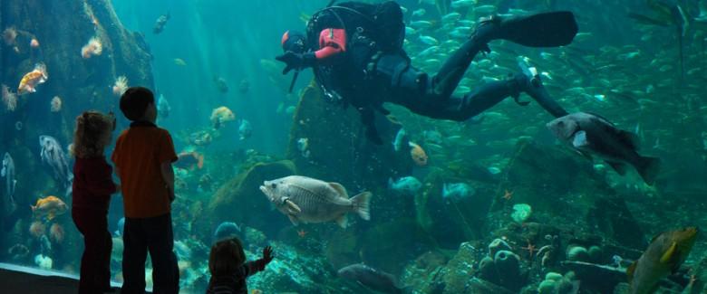 960x400_Vancouver_Aquarium