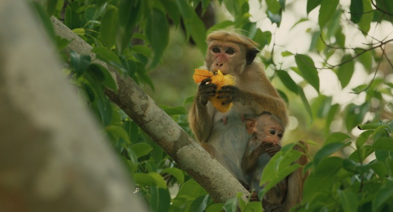 Disneynature's Monkey Kingdom. Photo Courtesy of TIFF Kids