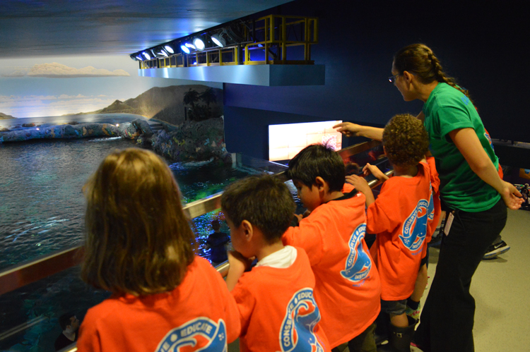 Go Behind The Scenes At Ripley's Aquarium With Summer Day Camps