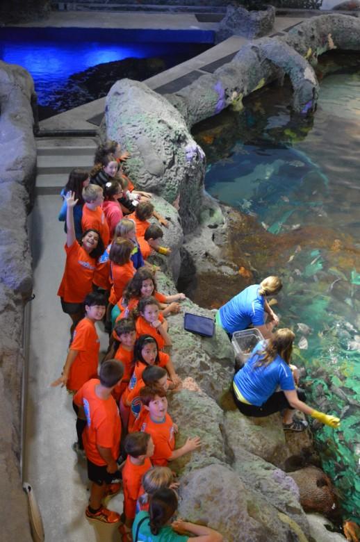 Ripely's Aquarium Summer Camps, summer camps, toronto, ripley's aquarium, fun toronto summer camps