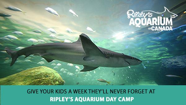 ripley's aquarium summer camps, toronto summer camps, ripley's aquarium, fun toronto summer camps