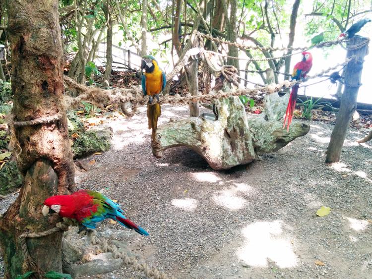 jamaica trip-dolphin cove-parrots