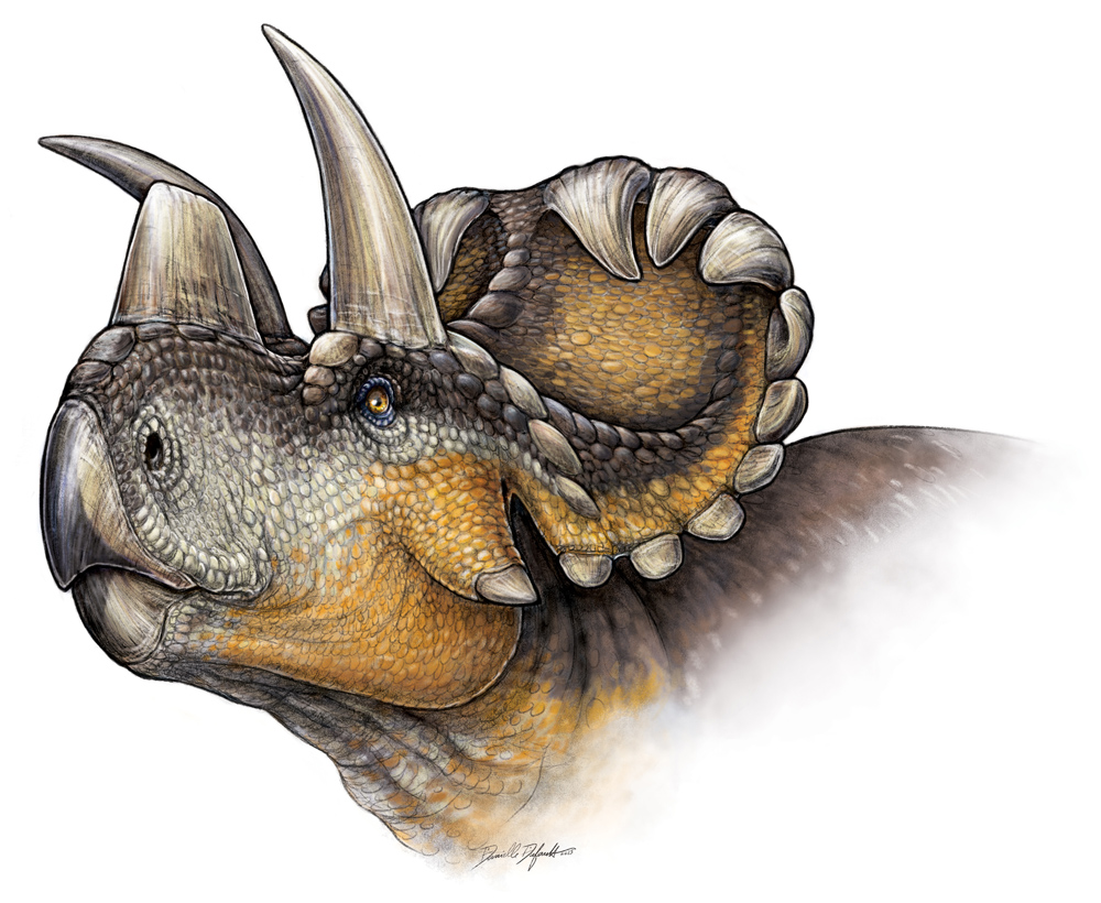 10 Facts About The Newly Discovered Dino Wendiceratops