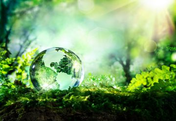 10 Simple Ways To Go Greener Without Breaking the Bank
