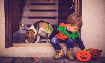 6 Peanut-Free Halloween Treats